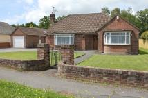 Ivy Road Detached Bungalow for sale