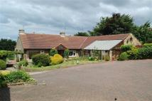 Bungalow for sale in Wetherby Road...