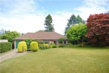 Bungalow for sale in Denbigh Road, Haslemere...