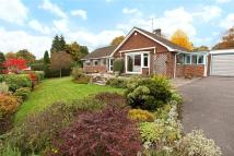 Detached Bungalow for sale in High Lane, Haslemere...