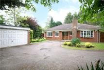 Bungalow for sale in Bath Road, Maidenhead...
