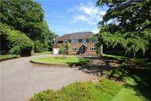 6 bedroom Detached home for sale in Red Hill, Medstead...