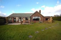 Detached Bungalow for sale in Garforth Cliff Selby...