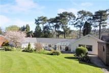 Bungalow for sale in The Avenue, Whyteleafe...