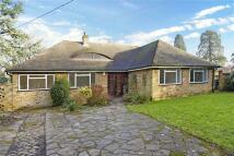 Detached Bungalow for sale in Leazes Avenue, Chaldon...
