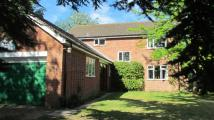 4 bed Detached property in Halesworth