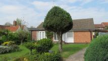 Detached Bungalow for sale in Halesworth