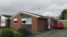 Detached Bungalow for sale in Holton, Halesworth