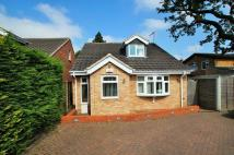 Detached Bungalow in Montague Road, Woodlands...