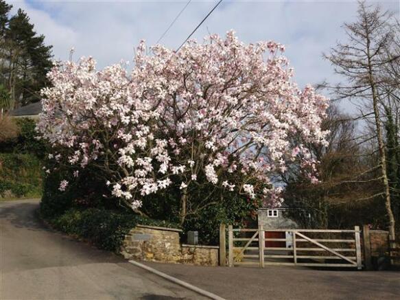 Magnolia Tree at Top