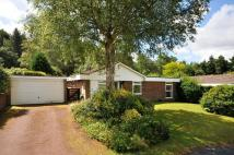 Detached Bungalow in Strawberry Close...