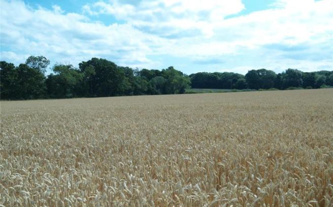 Arable Lot 1