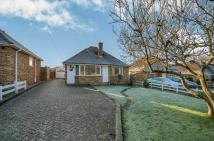 Detached Bungalow in Springford Close...