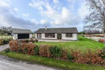 Detached Bungalow to rent in Fairacres, Bleak Lane...