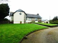Mynydd Bodafon Detached Bungalow for sale