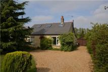 Detached Bungalow for sale in New Road, Haddenham, Ely...