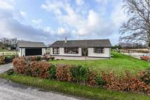 4 bed Detached Bungalow to rent in Fairacres, Bleak Lane...