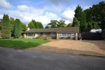Detached Bungalow for sale in Ifold