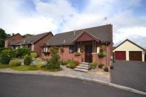 Detached Bungalow for sale in Lillington Way, Chard...