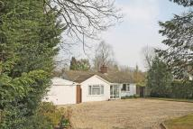 Detached Bungalow in Plaistow Road, Ifold...