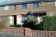 Terraced house to rent in Maple Avenue SHILDON