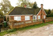 Bungalow for sale in The Grove, Liphook...