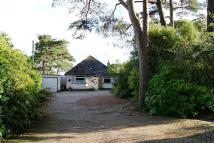 Detached Bungalow in Corfe Mullen