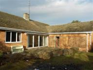 Detached Bungalow to rent in St Peters Close Lower...