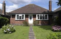 3 bed Detached Bungalow to rent in Elizabeth Drive, Oadby