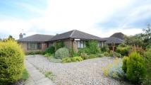 3 bed Bungalow for sale in Roman Road, Basingstoke...