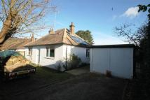 Detached Bungalow for sale in New Road, Gomshall