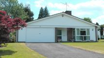3 bed Detached Bungalow in Fetcham