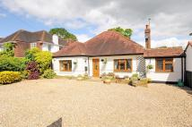4 bedroom Detached Bungalow in Claygate