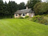 Detached Bungalow to rent in Dorran Cottage, Rossie...