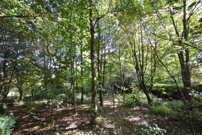 Wooded Area