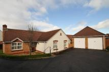 Bungalow for sale in Buchanan Close, Honiton...