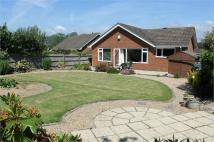 Detached Bungalow in Concorde Close...