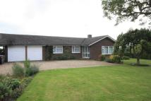 Bungalow to rent in Grange Green, The Street...