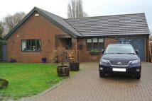 Bungalow to rent in Medina Avenue, Whitstable