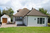 Detached Bungalow to rent in MAIN ROAD, KNOCKHOLT...