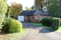3 bedroom Detached Bungalow in Cedarwood Close...