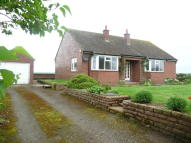 Detached Bungalow to rent in Walby Grange...