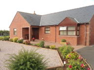 Detached Bungalow to rent in Bush On Lyne, Longtown...