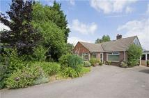 Bungalow to rent in Trowbridge Road, Seend...