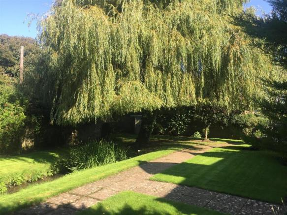 willow 2.JPG