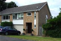 4 bed semi detached home to rent in Cedar Drive, Sunningdale...