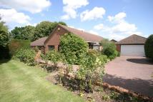 Detached Bungalow to rent in NEWMARKET, SUFFOLK