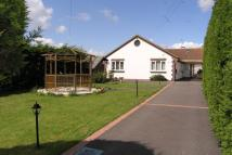 Detached Bungalow to rent in Harbour Road, Pagham...