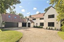 5 bedroom Detached property for sale in Warren Lane, Cottered...
