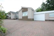 Detached Bungalow in 23 Manse Crescent...